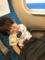 170528 新幹線でねんね
