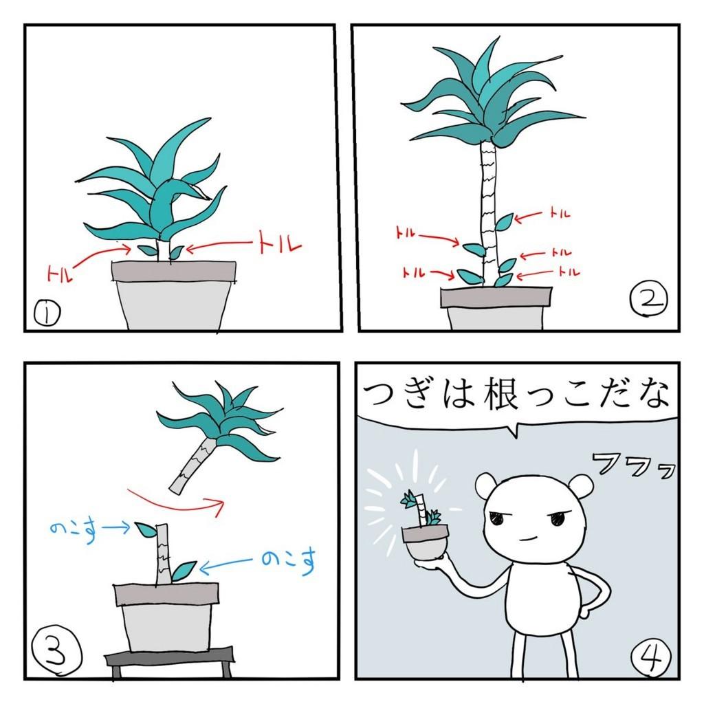 f:id:kanarihikokuma:20180629192050j:image:w300