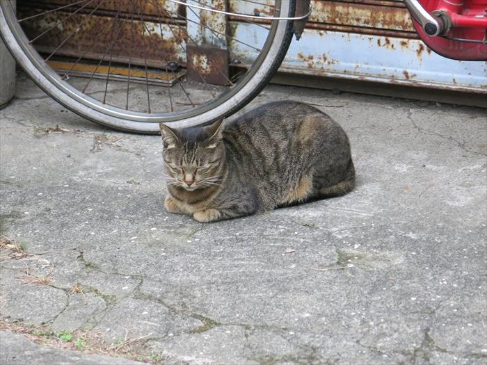 猫 日奈久温泉 八代 熊本 日本 Cat Hinagu Onsen Japan Kumamoto Yatsushiro
