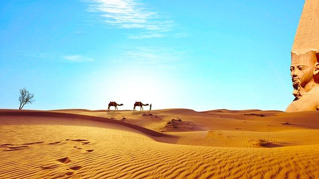 ラクダ 砂漠