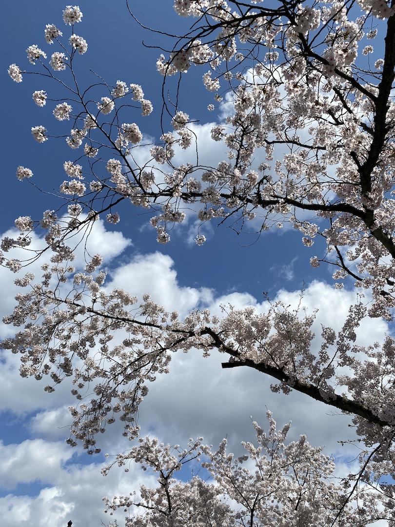 f:id:kanazawabiiki:20200407103000j:plain
