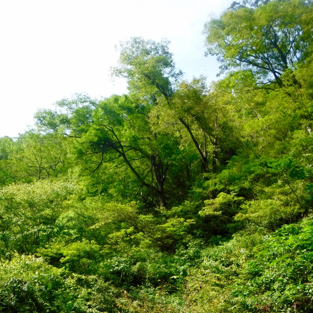 f:id:kanazawajazzdays:20160924172554j:plain