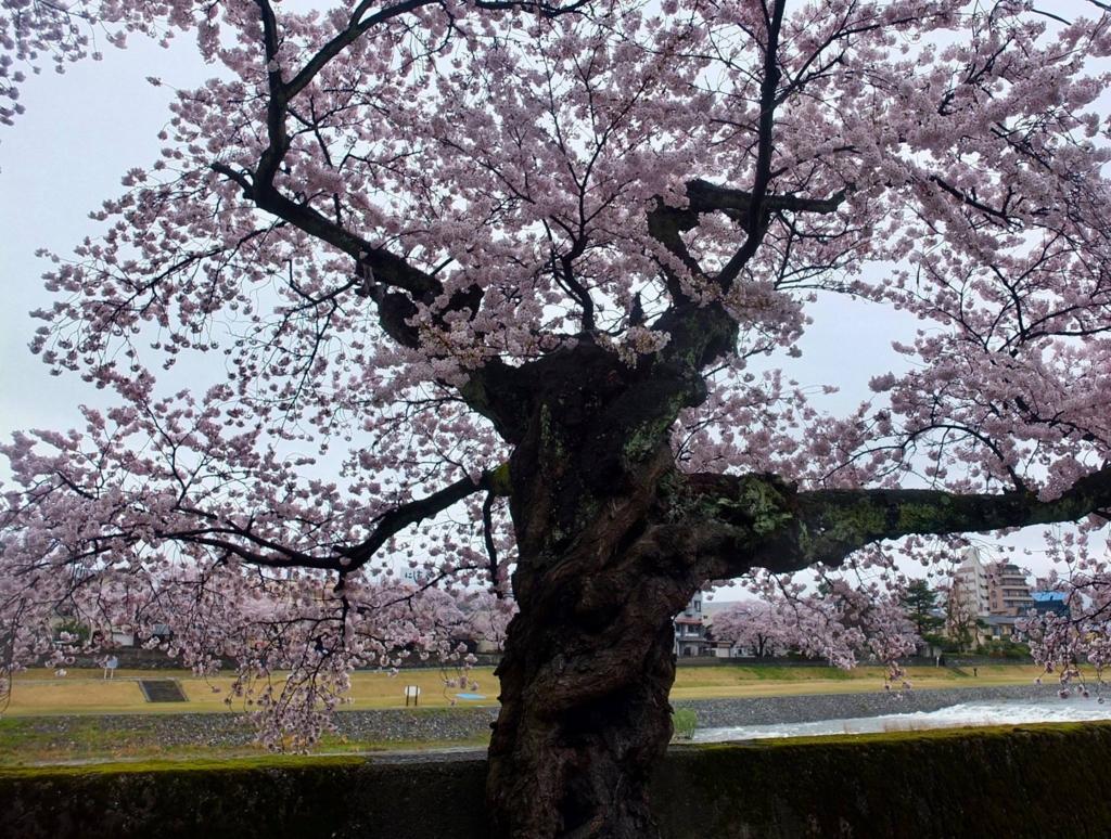 f:id:kanazawajazzdays:20170409200113j:plain