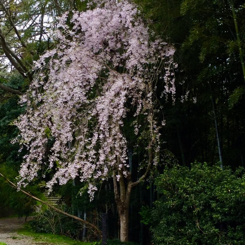 f:id:kanazawajazzdays:20180414181117j:plain
