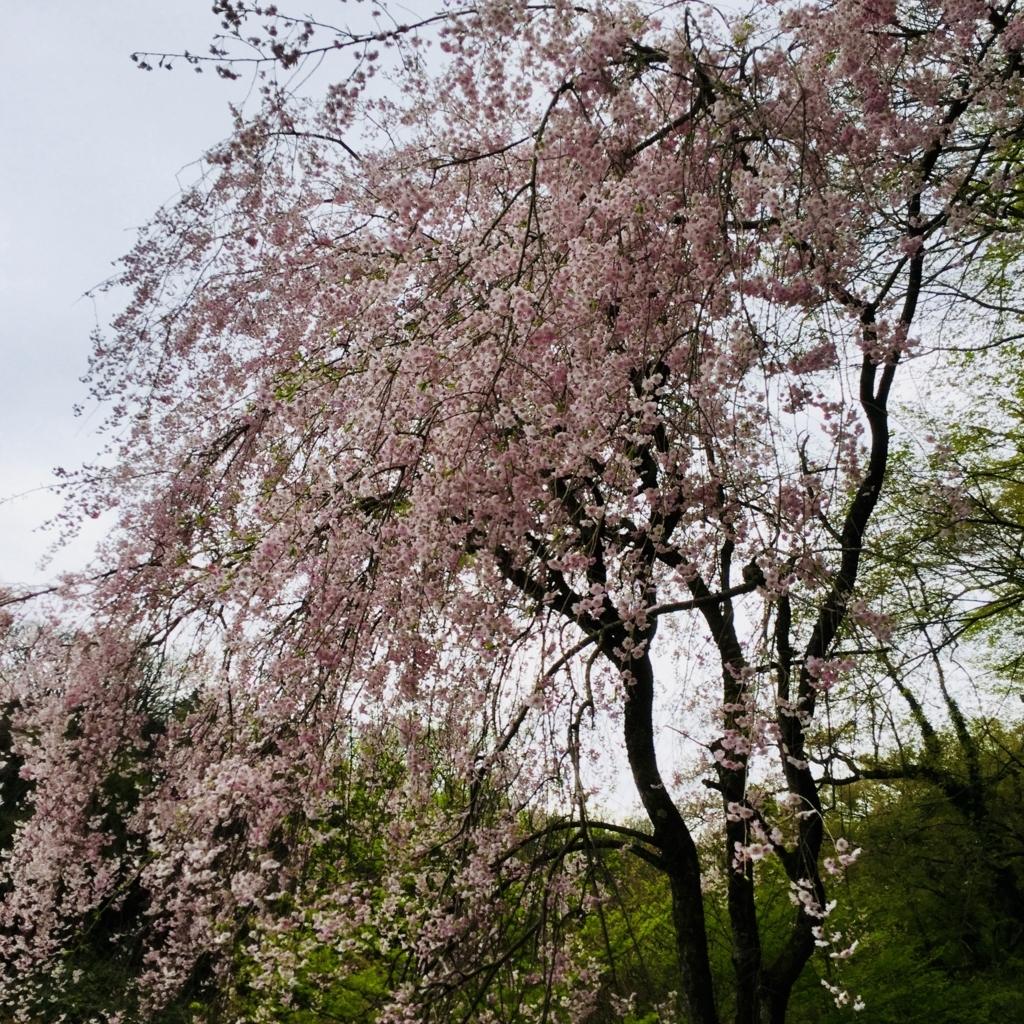 f:id:kanazawajazzdays:20180414181208j:plain