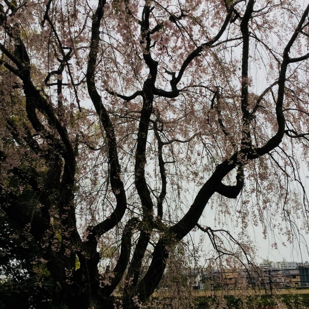 f:id:kanazawajazzdays:20180414181455j:plain