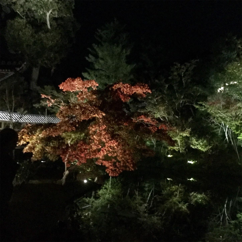 f:id:kanazawajazzdays:20181109090935j:image