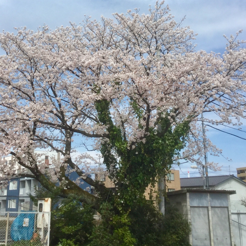 f:id:kanazawajazzdays:20190412182816j:image