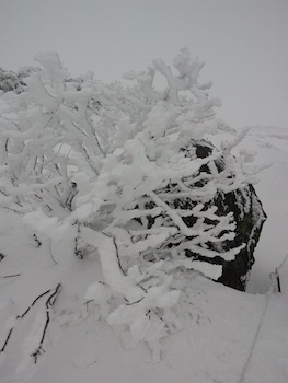 f:id:kanbaringo:20121101174531j:image