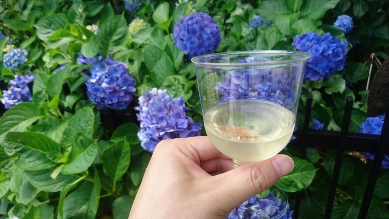 ワインと紫陽花