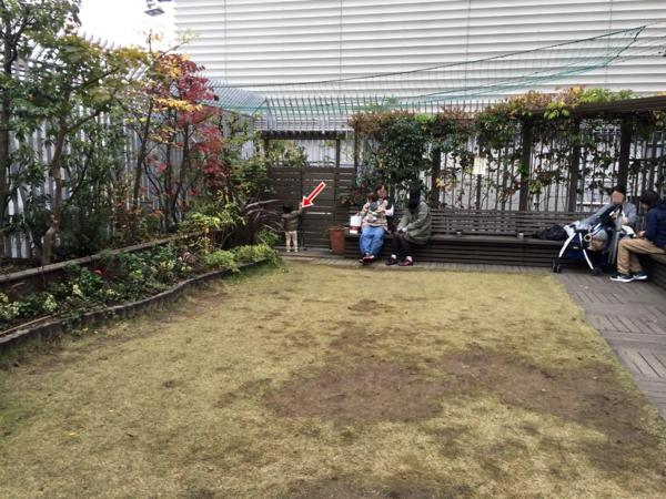 屋上広場奥の芝生で遊ぶ