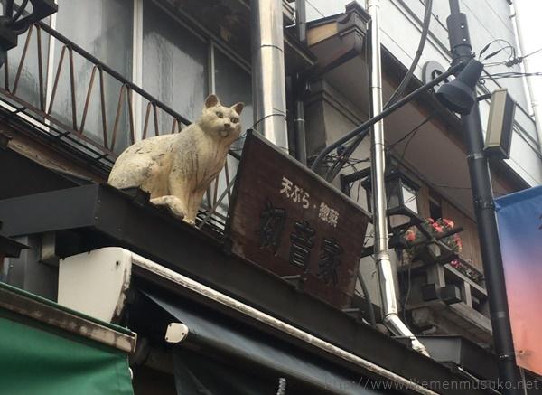 猫がお出迎え