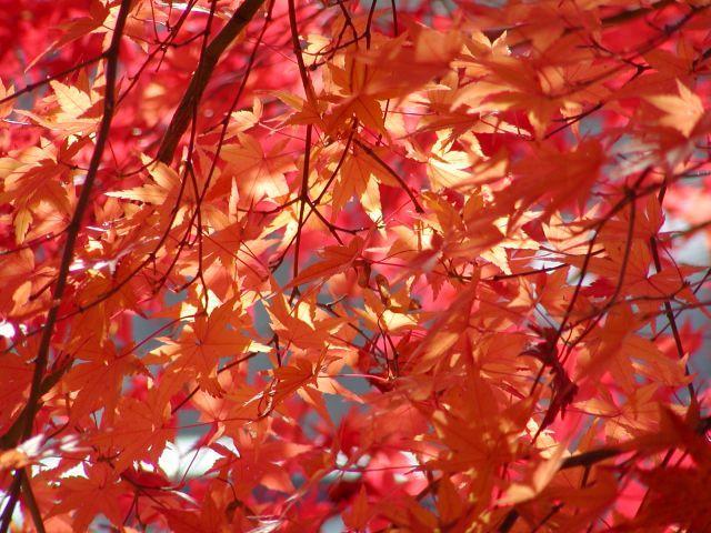天辻峠の秋の色