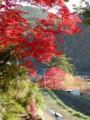 河内長野・八幡神社