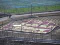 葉牡丹で干支の寅(富田林農業公園)
