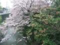 水間寺入口の桜と椿