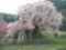 20110416 又兵衛桜
