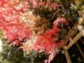 20121125天見・蟹井神社