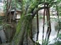 20130215小雨に濡れた浮月楼の庭園に歴史を感じた