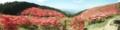 頂上の展望台からのパノラマ撮影。