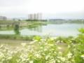 狭山池。日本最古だそうです。