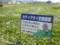 畝傍北小学校の生徒が苗の植え付けをしているところ