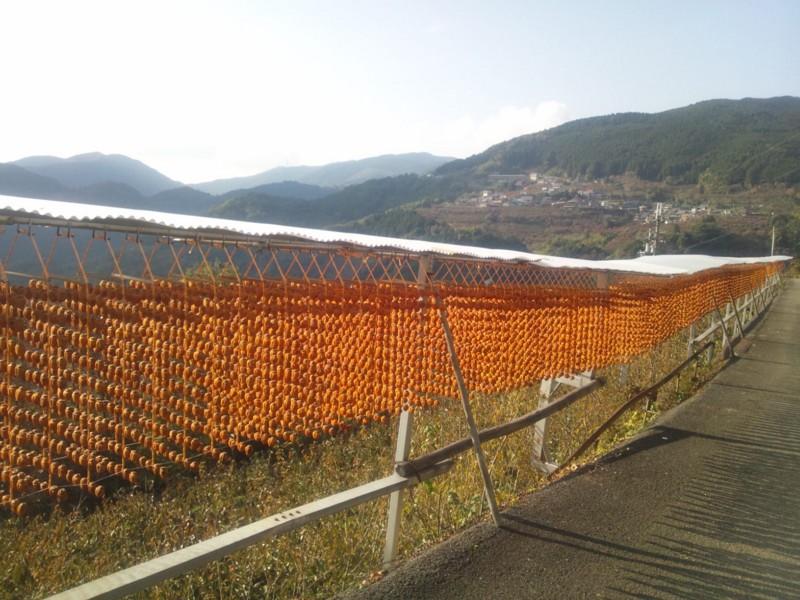 お正月に用いられる串柿のお話しです。