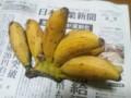 島バナナは小さいが甘くて日持ちする