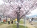 20140329狭山池の堤の桜