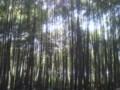 20140419 烏帽子形神社への参道の竹林