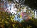 20141025 滝畑の紅葉