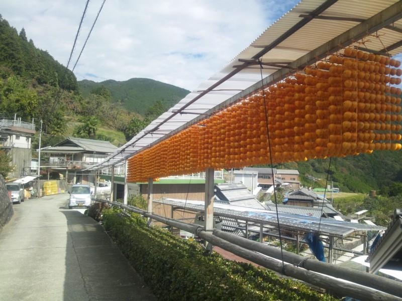 20141025 串柿の里「四郷」