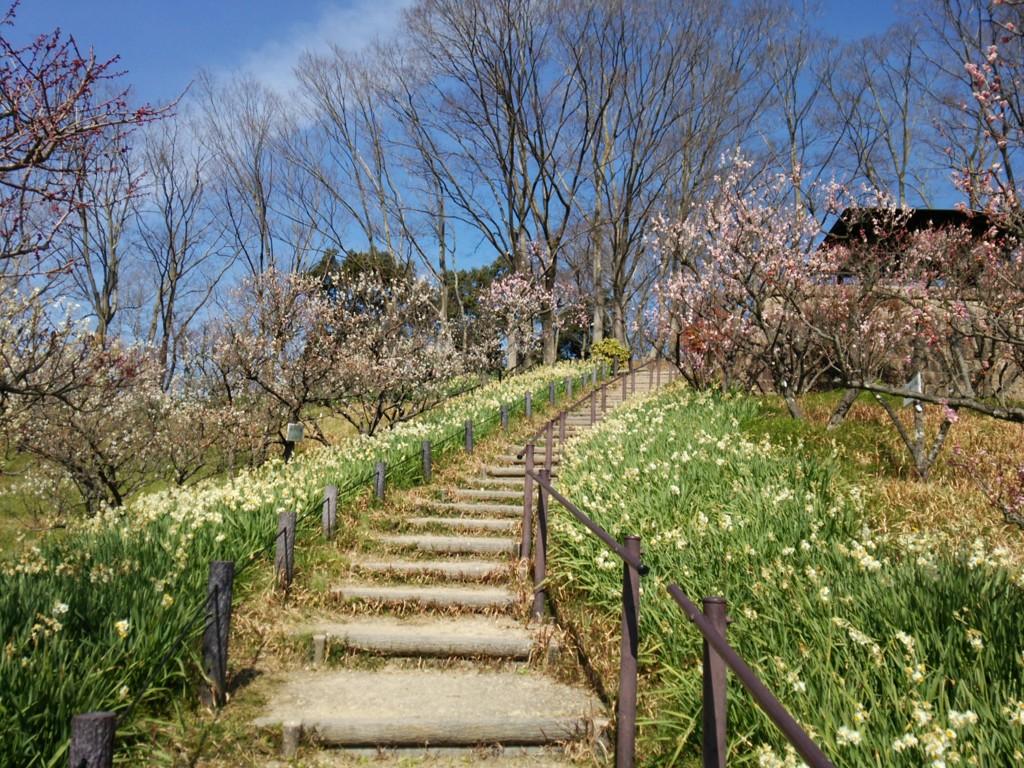 20170312錦織公園「梅の里」
