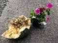 食べられたカボチャ、醜いので花を置いて撮影しました。