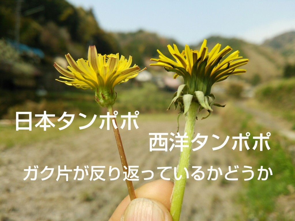 f:id:kandou:20180404191521j:plain