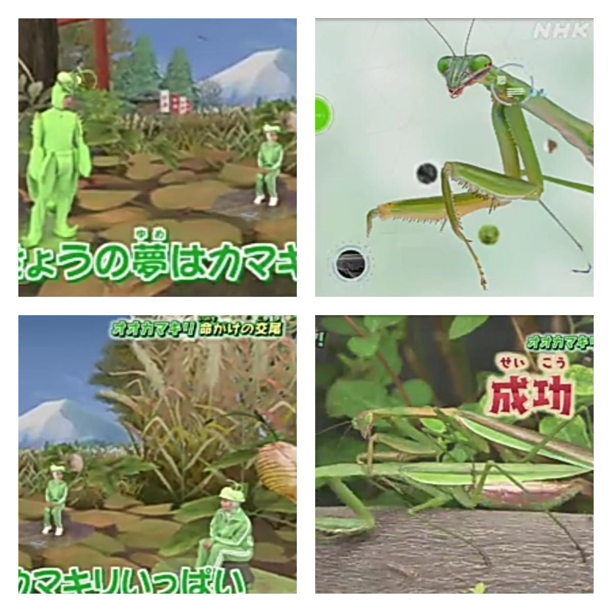 ものすごい 昆虫 図鑑