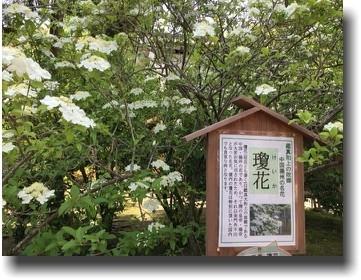 f:id:kane_katu:20190510020305j:plain
