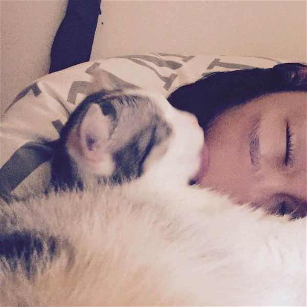 キョン・スジンと飼い猫