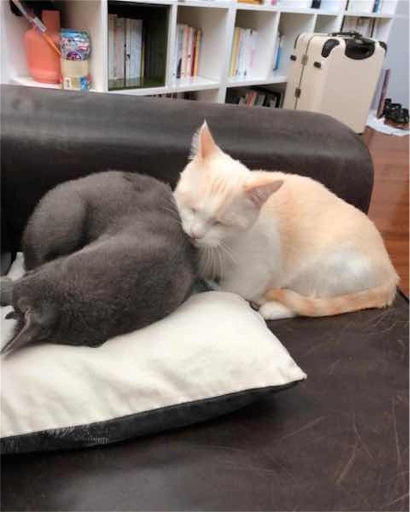 ソン・ダムビと飼い猫