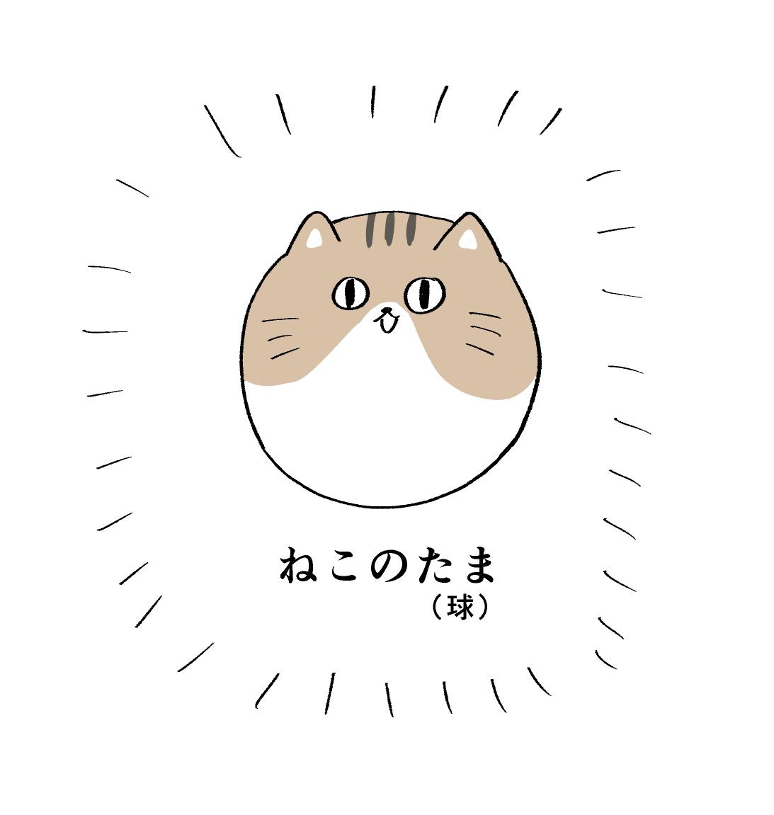 f:id:kanemotonomukuu:20190222110634j:plain
