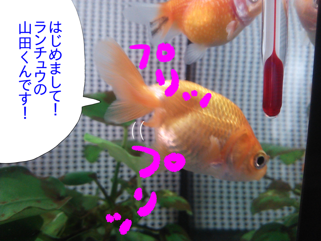 f:id:kanikanikaniyo:20161119145904p:plain