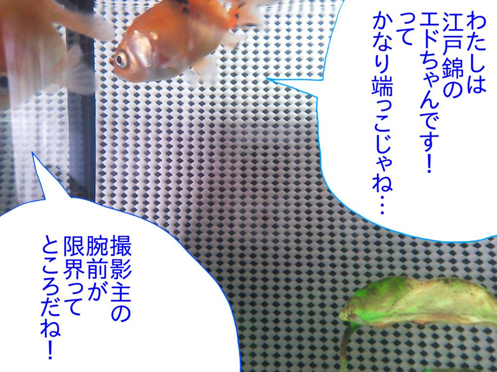 f:id:kanikanikaniyo:20161119145954p:plain