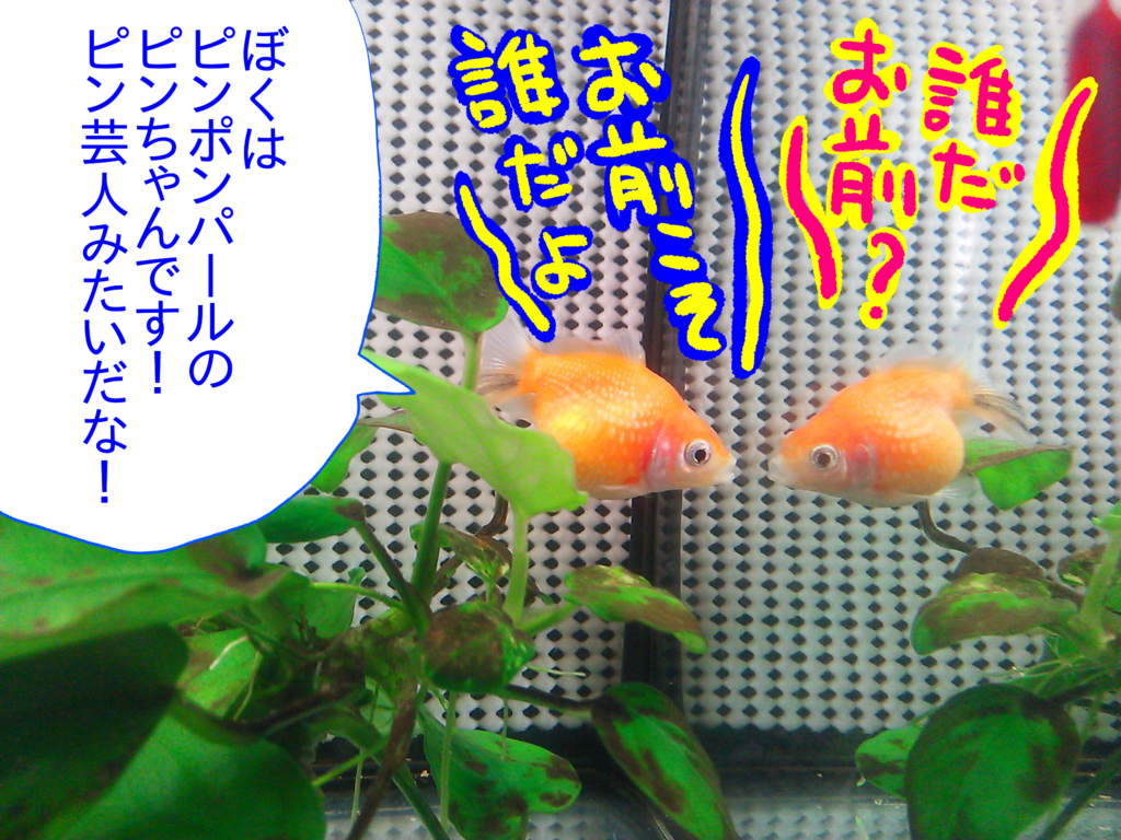 f:id:kanikanikaniyo:20161119150858p:plain