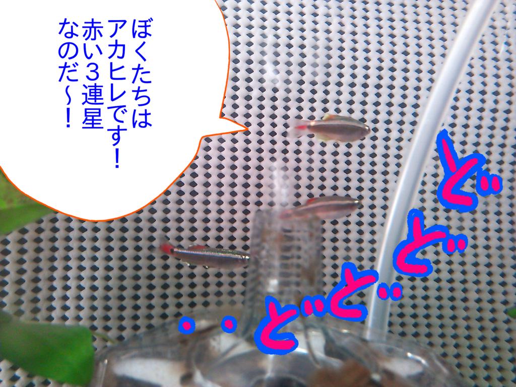 f:id:kanikanikaniyo:20161119151005p:plain