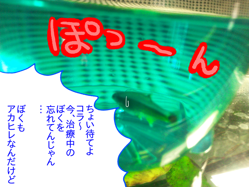 f:id:kanikanikaniyo:20161119154122p:plain