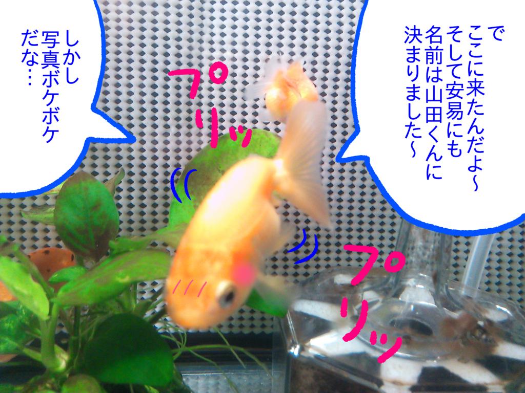 f:id:kanikanikaniyo:20161121161852p:plain