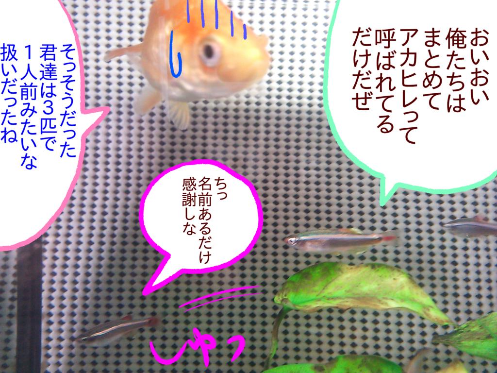 f:id:kanikanikaniyo:20161121162029p:plain
