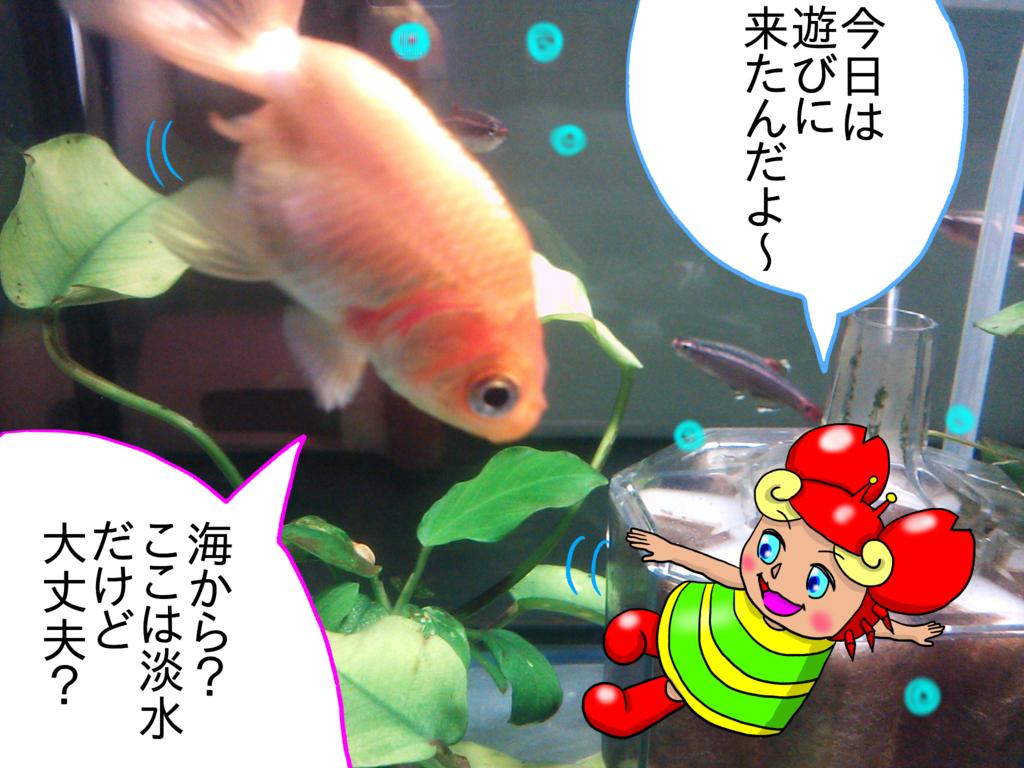 f:id:kanikanikaniyo:20161126161210p:plain