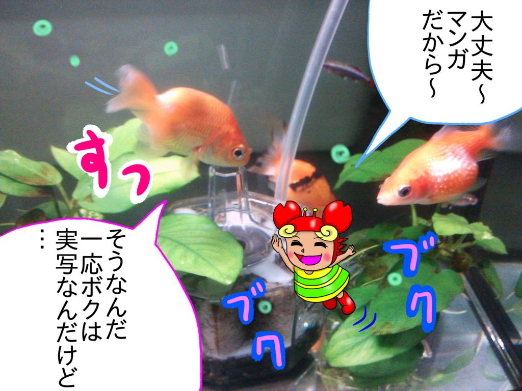 f:id:kanikanikaniyo:20161126161259p:plain