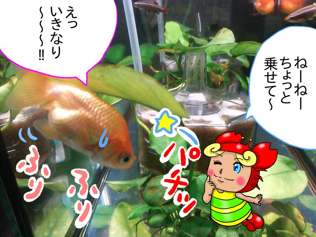 f:id:kanikanikaniyo:20161126161413p:plain